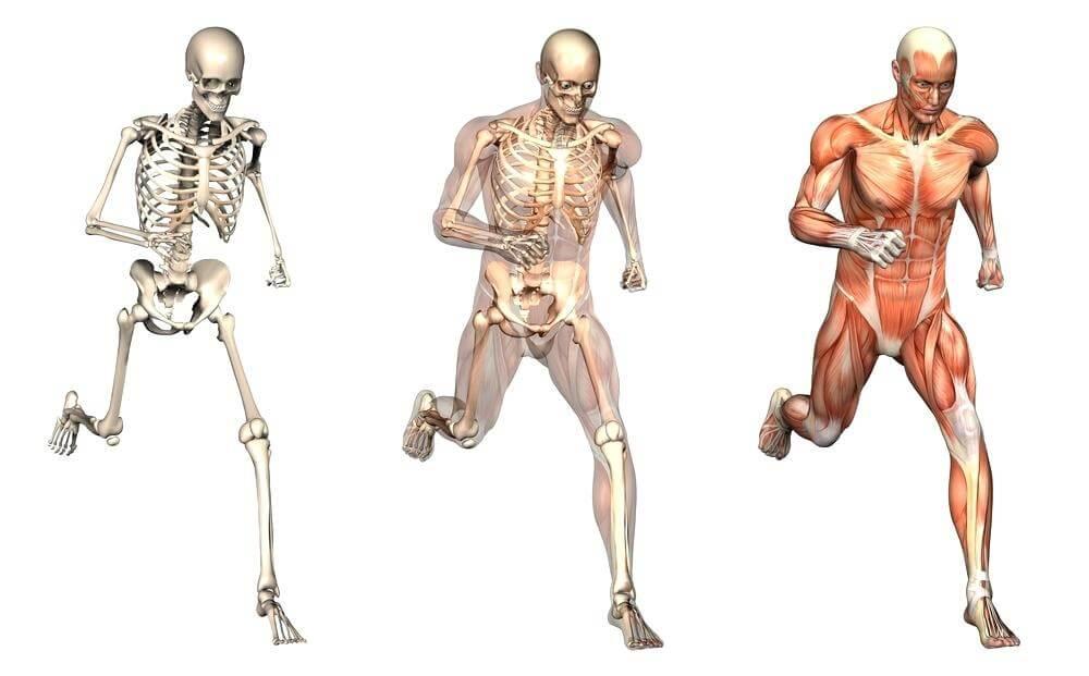 lesiones humanas